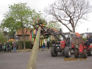 Der Baum muss hoch...
