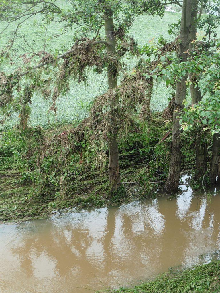 Bis zu drei Meter standen die Bäume im Wasser